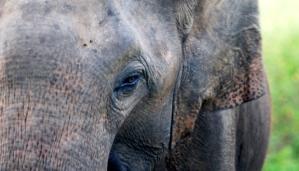 Credit: Subhra Priyadarshini, Nature India